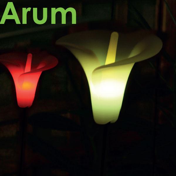 Arum lumineux